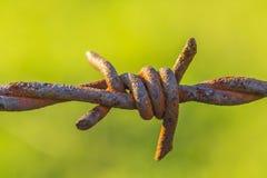 Barbwire oxidado fotografia de stock