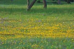 Barbwire rústico com as flores selvagens amarelas imagem de stock