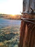 Barbwire-Sonnenuntergang Stockbild
