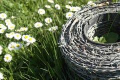 Barbwire und Gänseblümchenblumen auf einer Wiese Lizenzfreies Stockfoto