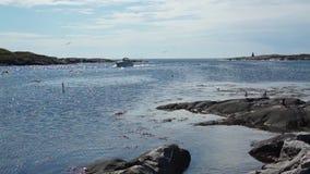 Barca che attraversa il fiordo intorno ai gabbiani stock footage