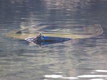 Barca d'affondamento Fotografia Stock Libera da Diritti
