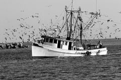 Barca del gamberetto fotografia stock