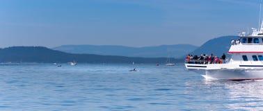 Barca di sorveglianza della balena vicino a due balene dell'orca fotografia stock libera da diritti