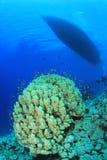 Barca di tuffo e barriera corallina Fotografia Stock