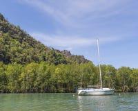 Barca durante il giro della mangrovia Immagini Stock Libere da Diritti
