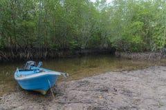 Barca e mangrovia nell'isola di Kood, Tailandia Immagini Stock