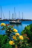 Barca e rose Immagini Stock