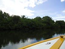 Barca e una palude della mangrovia fotografia stock