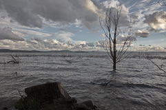 Barca ed albero d'affondamento Fotografia Stock