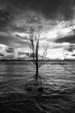Barca ed albero d'affondamento Fotografia Stock Libera da Diritti