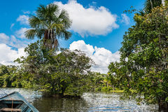 Barca nel fiume nella giungla peruviana di Amazon a Madre de Dios Immagine Stock