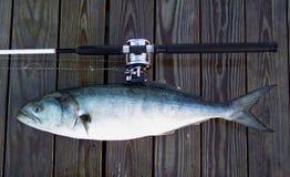 Barca Rod e pesce serra immagini stock