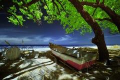 Barca sotto l'albero alla spiaggia Fotografie Stock
