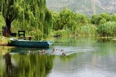 Barca sul fiume e sulle anatre Fotografia Stock