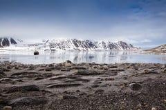 Barca turistica in Spitsbergen. Immagini Stock