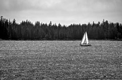Barca a vela in bianco e nero sul mare luccicante Fotografie Stock Libere da Diritti