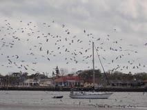 Barca a vela con gli uccelli spaventati Fotografia Stock