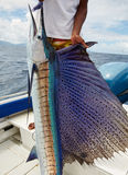 Barca a vela del pesce Fotografia Stock