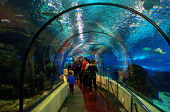 Barcelona akvariumtunnel Fotografering för Bildbyråer