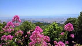 Barcelona altura flores abc-bok plano Arkivbilder