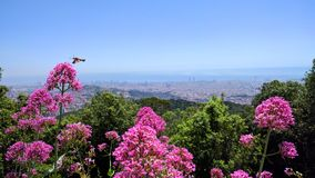 Barcelona altura flores abc-bok plano Royaltyfria Foton