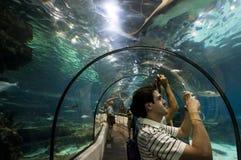 Barcelona aquarium Royalty Free Stock Photography