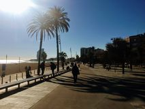 Barcelona Beach with Palm Trees. Stunning beach with sun shining on palm trees, on the path Royalty Free Stock Images