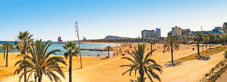 Barcelona beach. Panorama with palms in the foreground Royalty Free Stock Photo