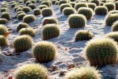 The Barcelona Cactus Garden Royalty Free Stock Photography
