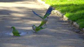 Barcelona city park parrots Stock Photo