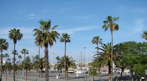 Barcelona city. Spain. City landscape and park views of the city. A panorama of the embankment street of a southern city along high palm trees on a blue sky stock photos