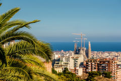 Barcelona cityscape overlook. Focus on palm tree. Royalty Free Stock Image