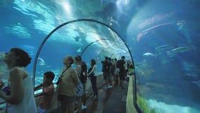 Barcelona, Espanha - 5 de agosto de 2018: Os turistas visitam o aquário de Barcelona Aquário situado em Vell portuário, um porto  video estoque
