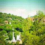 Barcelona forest green. Day time trees stock images