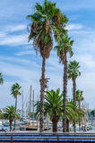 Barcelona harbor palm trees. Barcelona harbor with boats and palm trees stock images