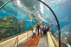 BARCELONA HISZPANIA, KWIECIEŃ, - 28: Akwarium tunel w Barcelona na Kwietniu 28, 2016 w Barcelona, Hiszpania Obraz Stock