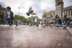 Barcelona, May 07, 2017: People feeding the pigeons in Placa de Catalunya near La Rambla Stock Photos