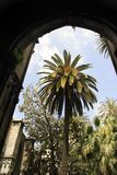 Barcelona palm trees. Garden in the centre of barcelona's cathedral in the gothic quarter royalty free stock images