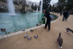 Barcelona, Parc Citadeli, March 2016: People feed ducks and pigeons in a city pond Royalty Free Stock Photography