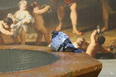 Barcelona Pigeon and wall-painting. Barcelona Pigeon Fountain and Fresco Royalty Free Stock Photo