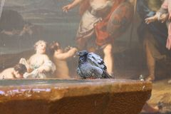 Barcelona Pigeon and wall-painting. Barcelona Pigeon Fountain and Fresco Stock Photography