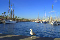 Barcelona port seagull Stock Images