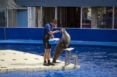 Barcelona sea lions show Stock Images