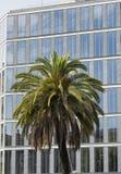 Barcelona & x28; Spain& x29;: byggnad och palmträd Royaltyfri Bild