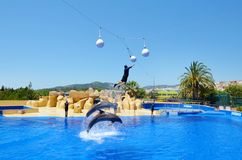 Jumping dolphins at Dolphin Show in a Zoo. BARCELONA,SPAIN/JUNE 15,2018:Jumping dolphins at Dolphin Show in a Zoo stock photos