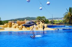 Jumping dolphins at Dolphin Show in a Zoo. BARCELONA,SPAIN/JUNE 15,2018:Jumping dolphins at Dolphin Show in a Zoo stock photo