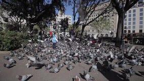 Barcelona, Spanien - 27. April 2018: Ein erwachsener Mann, der viele Tauben im Park einzieht stock video footage