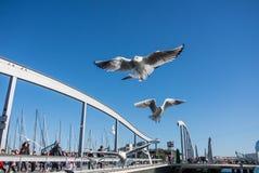 BARCELONA, SPANIEN - 12. FEBRUAR 2014: Eine Ansicht zu einem Pier mit Yachten, einem Damm und Fliegenseemöwen an Barcelona-Hafen Lizenzfreie Stockfotografie