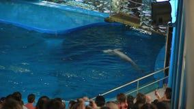 Barcelona Zoo summer stock footage